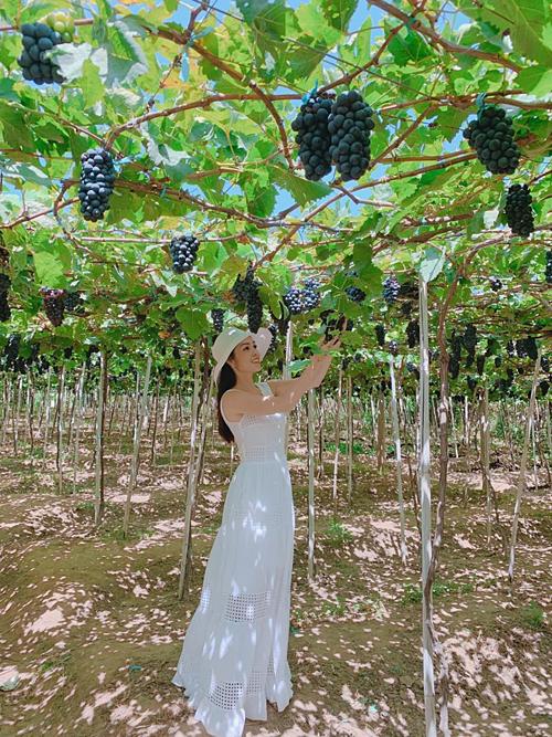 Dương Cẩm Lynh thích thú khi lạc vào vườn nho ở Ninh Thuận.