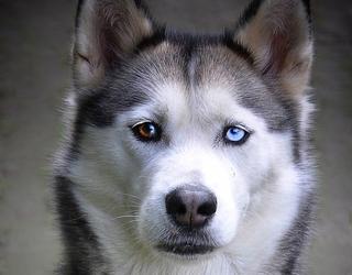 Nhìn chó đoán tính cách chủ nhân - 4