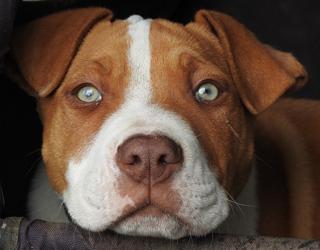 Nhìn chó đoán tính cách chủ nhân - 6