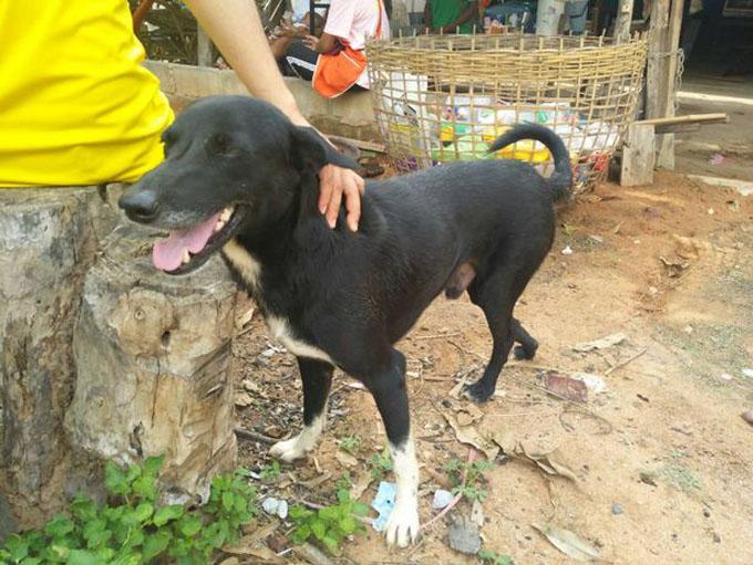 Chú chó Ping Pong đã đánh hơi thấy mùi lạ dưới đất gần nơi bé sơ sinh bị chôn sống. Ảnh: Viral Press.