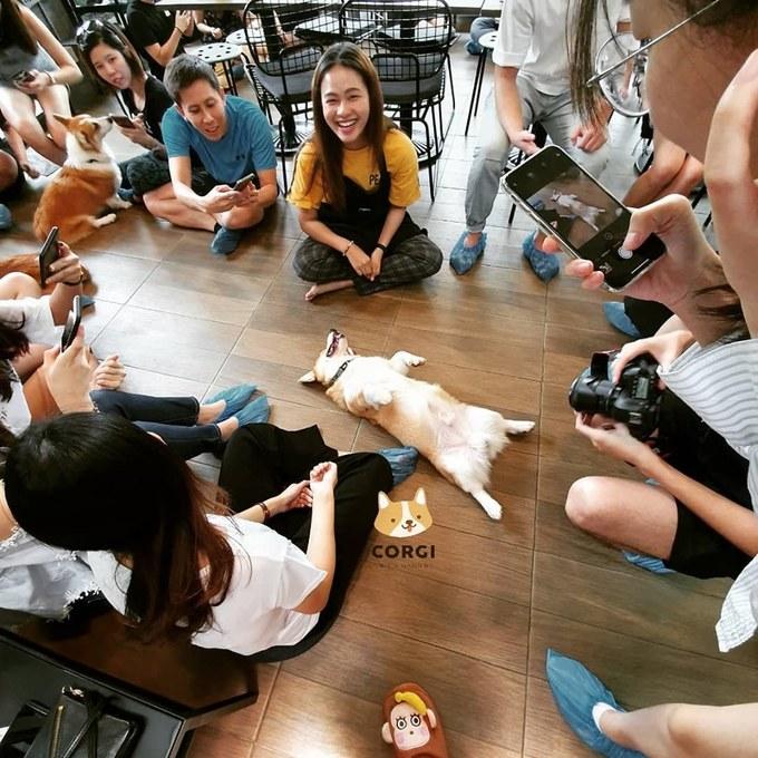 Quán cà phê chó corgi ở Bangkok