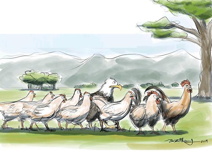 Một phút đọc: Chú chim đại bàng sống giữa bầy gà