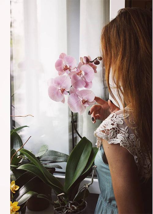 Bạn thấy ORCHIRD (hoa lan)