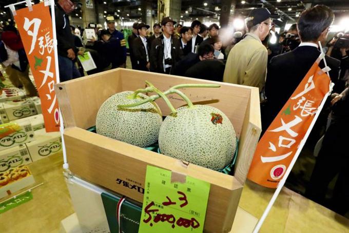 Cặp dưa lưới vừa bán đấu giá thành công tại chợ Sapporo Central Wholesale. Ảnh: Straitstimes.