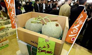 Cặp dưa lưới giá hơn 1 tỷ đồng tại Nhật Bản