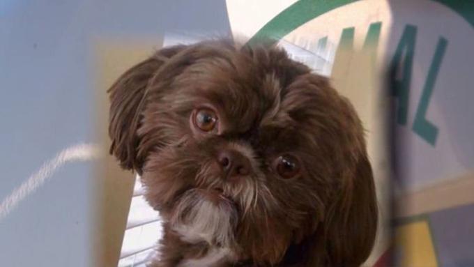 Chó Emma phải chết theo như di nguyện của bà chủ quá cố. Ảnh: O.C.