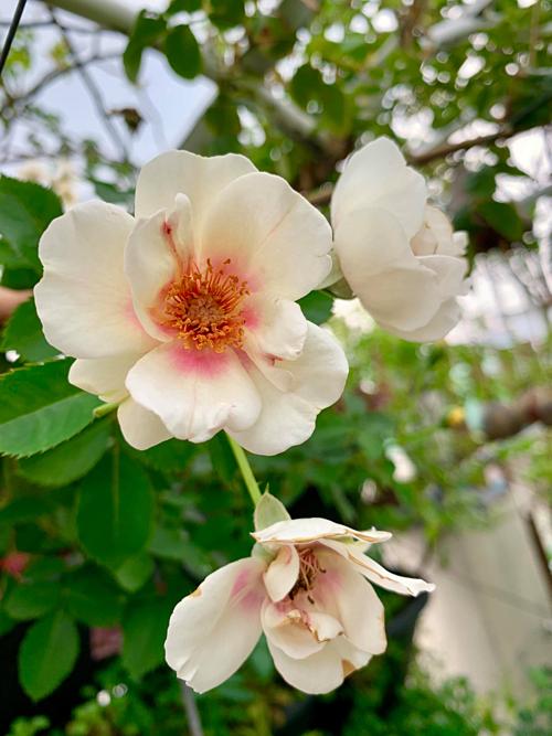 Vườn trên cao tiện lắm. Cứ dùng những gì mình trồng sẵn là có đồ ăn uống quanh năm, chị Thanh Hiền vừa kết luận vừa chia sẻ bộ sưu tập cả nghìn bức ảnh về khu vườn sân thượng trong điện thoại của mình.