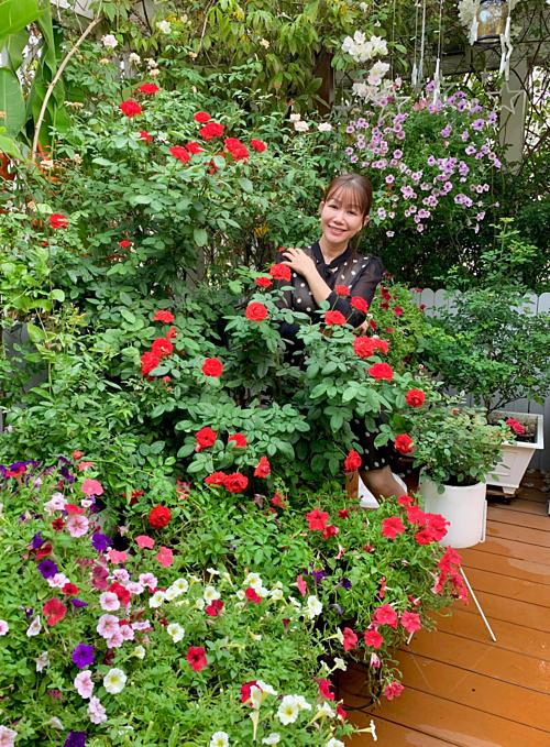 Hồng tố nữ đỏ rực một góc vườn. Đây là loại hoa chịu được cái nóng của Sài Gòn nên gần chục ngày mới tàn. Chu kỳ nởhoa khoảng 26-30ngày.
