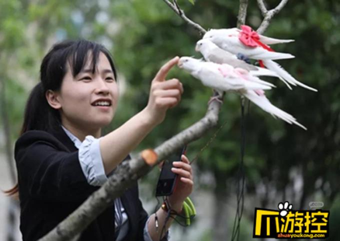 Zheng Han kiếm được khoản thu nhập tốt nhờ tự thiết kế các mẫu bỉm cho chim. Ảnh: China Daily.