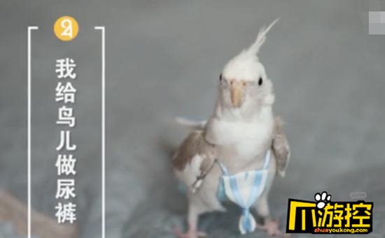 Một con chim mặc bỉm của Zheng Han thiết kế. Ảnh: China Daily.