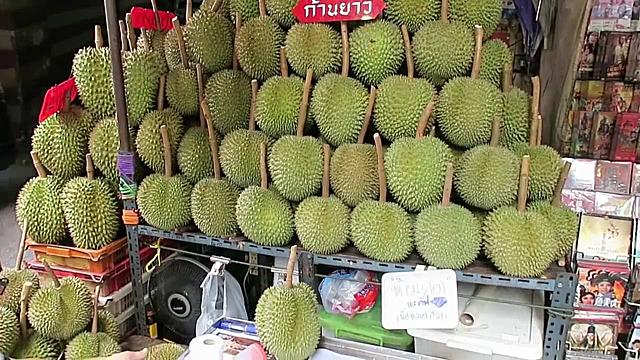 Quả sầu riêng tiền tỷ ở Thái Lan có gì đặc biệt - 1