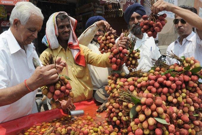 Huyện Muzaffarpur là vùng trồng vải nổi tiếng của Ấn Độ. Ảnh: Telegraph.