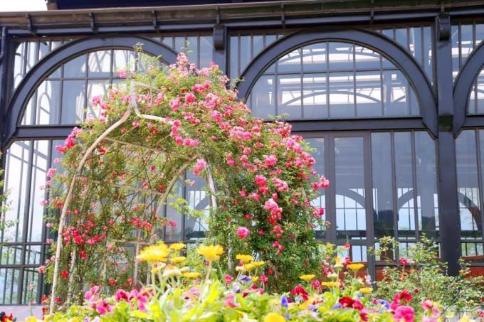 Những ngày hè nhiệt độ lên cao, nắng nóng, du lịch đến một vùng đất mát lạnh, không khí thoáng đãng là gợi ý hay cho các gia đình. Khu du lịch Sun World Fansipan Legend tại Fansipan, Sa Pa, với bốn mùa hoa nở rộ sẽ là điểm đến thú vị dành cho bạn và người thân.