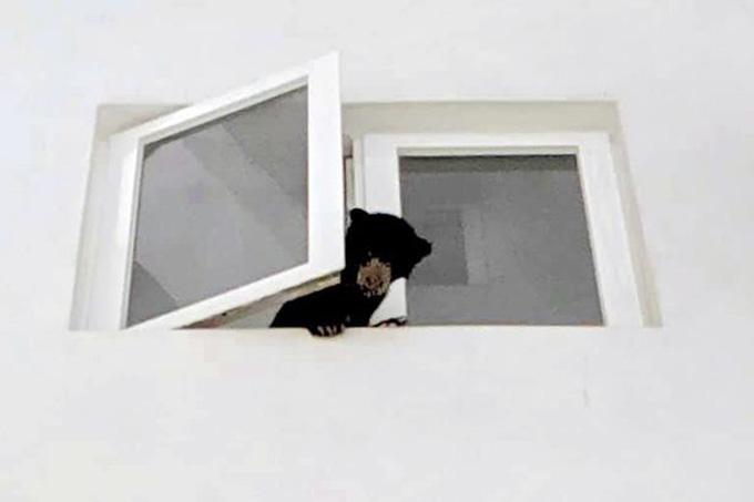 Con gấu chó được những người hàng xóm phát hiện trong căn hộ của Yasin. Ảnh: Facebook.