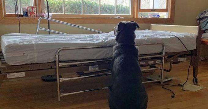 Moose ngồi bên giường bệnh chờ ông chủ quay lại. Ảnh: NorthStar Pet Rescue.