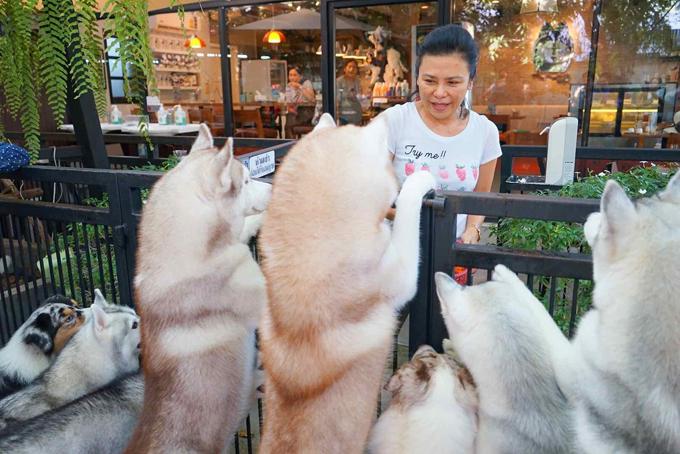 Đông Nhi - Ông Cao Thắng ghé quán cà phê chó husky đáng yêu ở Thái - 1