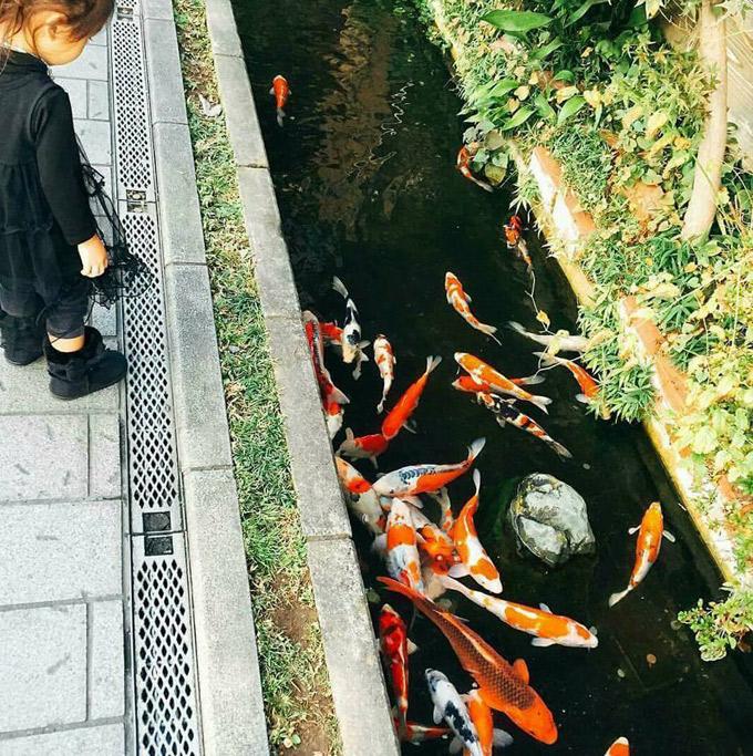 Thị trấn có nguồn nước sạch tới nỗi cá bơi dưới cống ở Nhật - 1