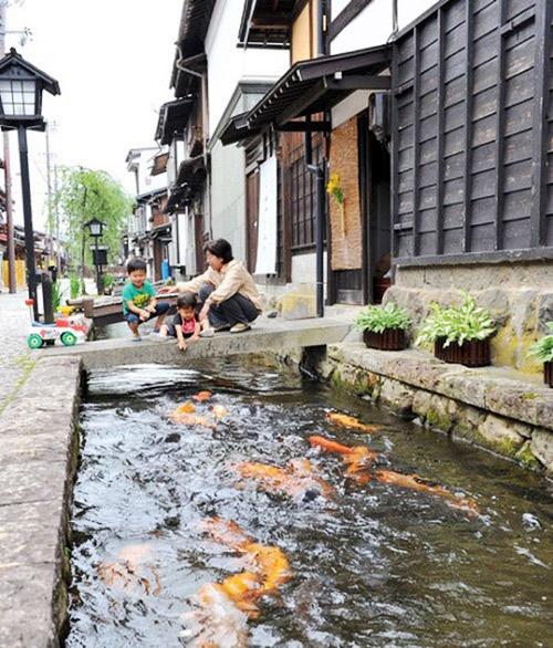 Thị trấn có nguồn nước sạch tới nỗi cá bơi dưới cống ở Nhật - 2