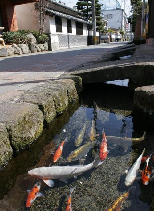 Thị trấn có nguồn nước sạch tới nỗi cá bơi dưới cống ở Nhật
