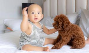 Ảnh sao 26/6: Con trai Thúy Diễm lần đầu chơi với chó