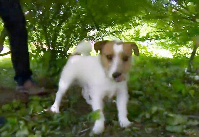 Chú chó Macho được ca ngợi vì có công cứu sống bé gái sơ sinh bị vứt bỏ. Ảnh: East2west.