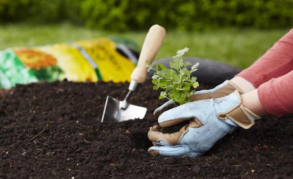 Làm vườn Làm vườn giúp tiêu hao một lượng calo không nhỏ. Việc kết thân với cây cối cũng là một cách tăng cường sức khỏe và cải thiện tâm trạng.