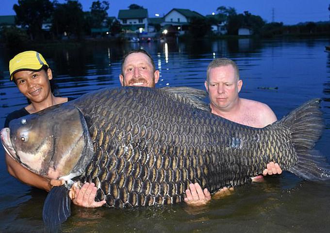 John (đứng giữa) và con cá chép xiêm nặng 105 kg câu được ở Thái Lan hôm 3/7. Ảnh: BNPS.