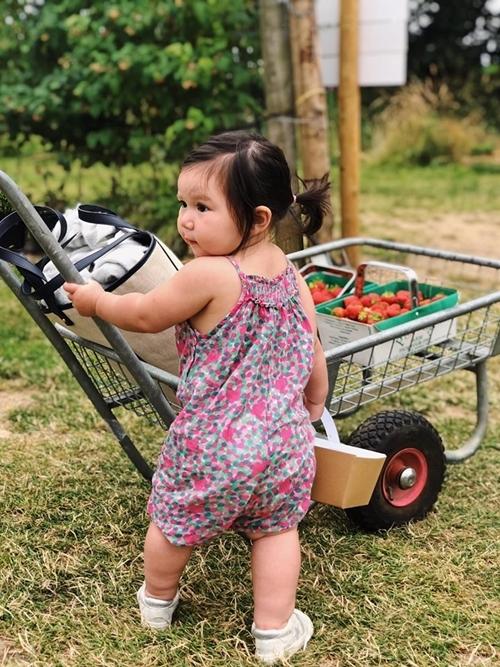 Bé tỏ ra phấn khích khi được cùng bố mẹ thu hoạch những trái dâu chín mọng.