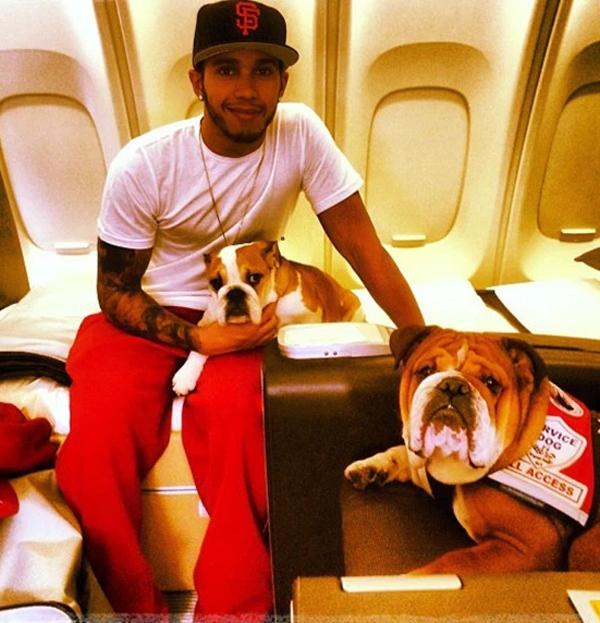 Hamilton thường xuyên đem theo chó nuôi lên chuyên cơ.