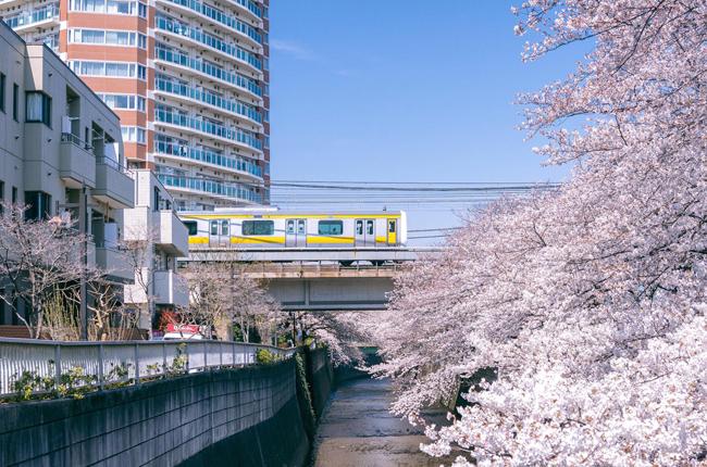 Thẻ đi tàu JR Pass ở Nhật  dùng sao cho hợp lý - 1