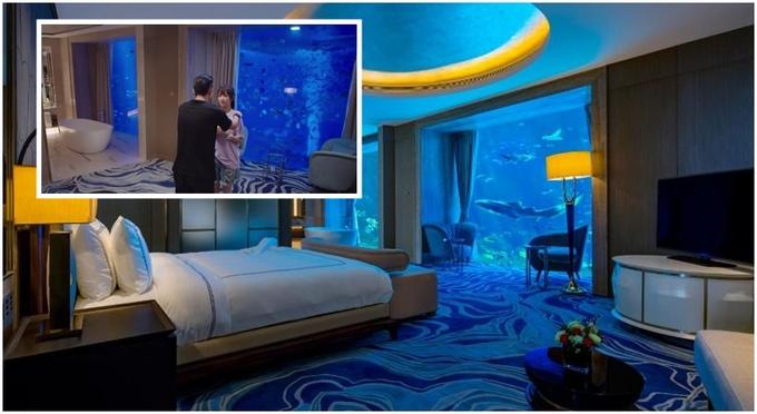 Phòng khách sạn ngắm 'đại dương thu nhỏ' trong phim 'Cá mực hầm mật'