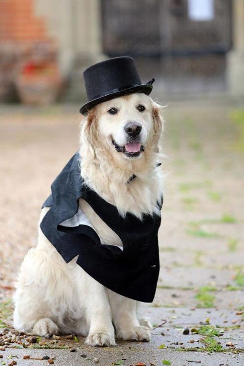 Trong hôn lễ, Elizabeth dự định diện cho Logan chiếc ghi-lê, thắt nơ, đội mũ đen. Elizabeth sẽ đeo nhẫn cưới như mọi cô dâu khác còn Logan sẽ đeo vòng tay bằng vàng.