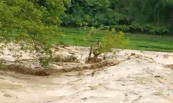 Ông Chon nhiều giờ mắc kẹt trên ngọn cây giữa dòng suối dữ và hiện chưa thể giải cứu thành công. Ảnh: Q. Sơn.