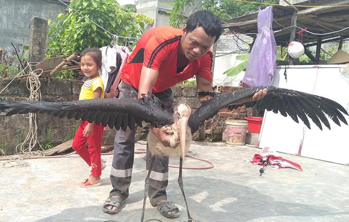 Chim có sải cánh rộng 2 m. Ảnh: H.L