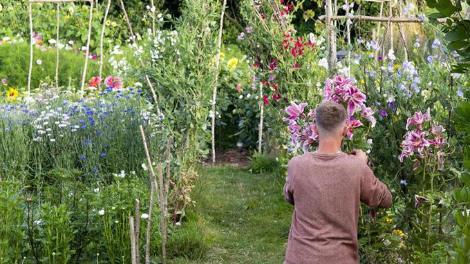 Để hiện thực hóa đám cưới trong mơ, Aimee và Tyler dành nhiều thời gian để gieo trồng hoa vào mùa đông năm ngoái với cánh tay gần như đóng băng. Mùa hè, họ luôn ra vườn trước 7h để tưới nước và không rời vườn trước 22h. Phần lớn các ngày cuối tuần trong năm qua, uyên ương đều có mặt ở vườn. Khu vườn của cả hai có 20 loại hoa: anh túc, thược dược, hướng dương, các loại hoa dại...