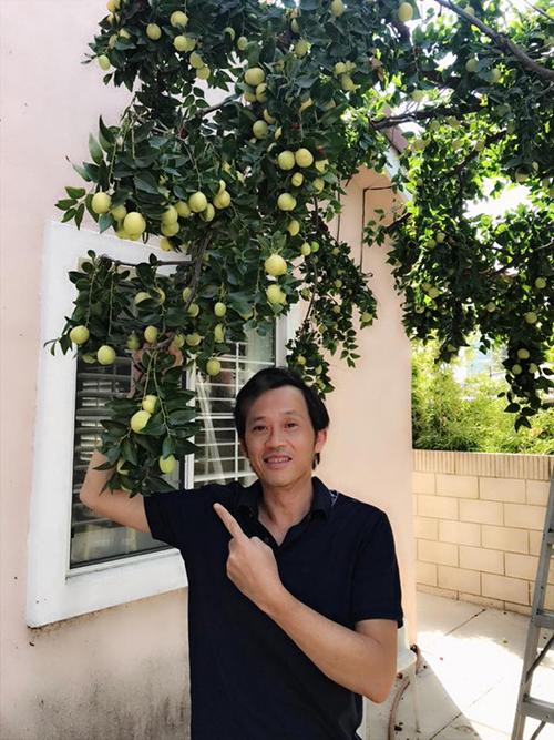 Danh hài Hoài Linh khoe cây táo do người thân trồng bên Mỹ sai trĩu quả.