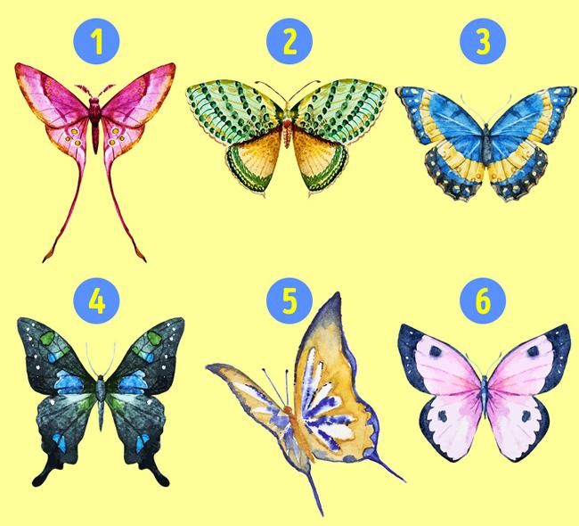 Cánh bướm mô tả nội tâm bạn
