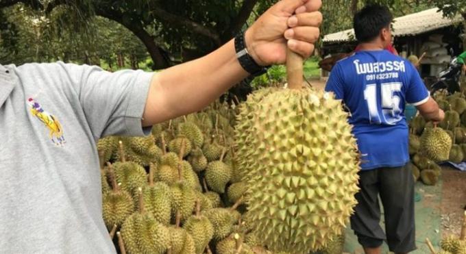 Sầu riêng - vua trái cây ở Thái Lan. Ảnh: Coconuts.