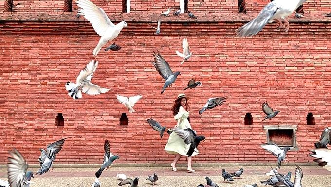 Dịch vụ đuổi chim chụp ảnh sống ảo