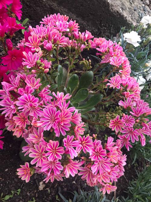Chị mê hoa và đặt nhiều chậu đến nỗi có lúc tự than rằng: Chỗ thì không có mà thấy cây gì cũng ham.