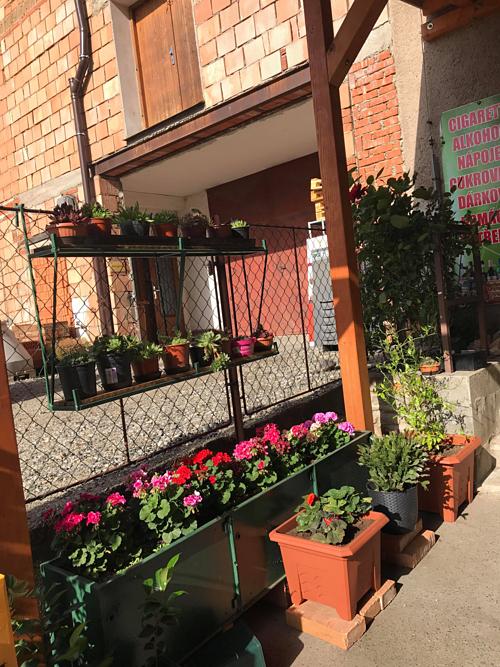 Bà mẹ Việt tại Czech chia khu vườn thành nơi trồng rau và hoa. Nếu như rau được trồng trong nhà kính để đảm bảo nhiệt độ thích hợp, không bị sâu bệnh thì hầu hết khu vực ngoài trời được sử dụng để đặt những chậu hoa khoe sắc.