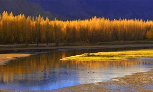 Hồ 'vàng' như tranh vẽ ở Tây Tạng