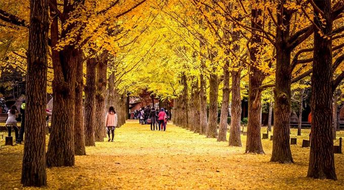 Điểm ngắm mùa thu ở châu Á - 4