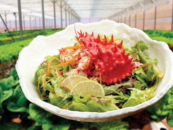Hanasaki Salad (Salad cua Hanasaki): Món salad giúp thực khách cân bằng lại khẩu vị sau khi thưởng thức loạt món ngon chế biến từ cua Hanasaki. Đĩa rau xanh tươi mát, lấy trưc tiếp từ trang trại rau của Sushi Hokkaido Sachi, xốt chua ngọt cùng thịt cua Hanasaki, là một trong những món ăn bạn không thể bỏ lỡ.