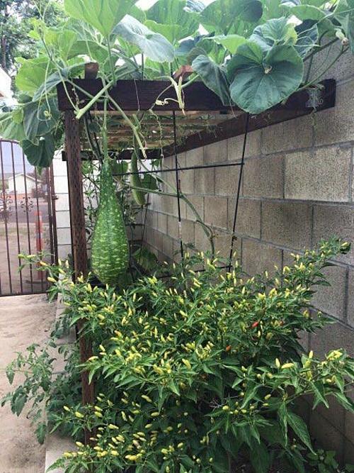 Ngôi nhà của vợ chồng ca sĩ Hương Lan ở California, Mỹ có tổng diện tích gần 1.000 m2. Trong đó, nhà ở chiếm khoảng 360 m2, còn lại là khoảng đất trống được phân bổ ở trước và sau nhà. Nữ ca sĩ chuyên dòng nhạc trữ tình cho biết vợ chồng chị bắt tay vào xây dựng nhà và vườn từ năm 2017.