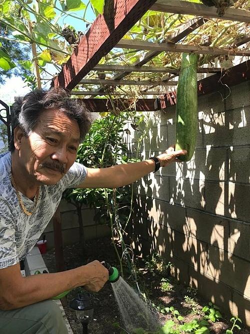 Anh Toản (chồng của ca sĩ Hương Lan) là người trồng trọt, chăm sóc chính cho khu vườn, tôi chỉ phụ anh tưới cây, thu hoạch rau trái theo lệnh của anh thôi, nữ ca sĩ cười vui khi chia sẻ về khu vườn.