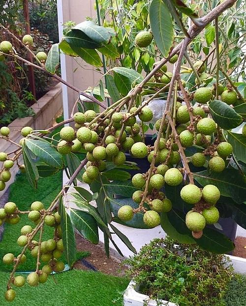 Vợ chồng chị thường mua hạt hoặc cây giống tại các nhà vườn của mình. Hoặc trong những chuyến công tác, Hương Lan và ông xã lại đem về vài loại hạt giống cây đặc biệt.