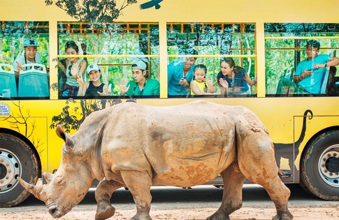 Những chú tê giác sống trong môi trường bán hoang dã và được theo dõi, chăm sóc cẩn thận.