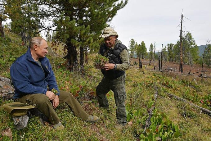 Trong một chặng dừng chân, Bộ trưởng Shoigu còn đào được một bụi dâu dại. Hãy trồng nó tại vùng Matxcơva đi!,Tổng thống Putin vừa nói vừa cười với vị bộ trưởng. Ảnh: USA Today.