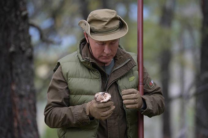 Tổng thống Putin cùng Bộ trưởng Shoigu hái nấm trong cánh rừng Taiga của Siberia. Có một hạt thông mắc lại trên đỉnh cây nấm này, tổng thống Putin hào hứng chia sẻ với ông Shoigu. Hái nấmcũng là hoạt động yêu thích của người dân Nga vào mùa thu. Ảnh: USA Today.